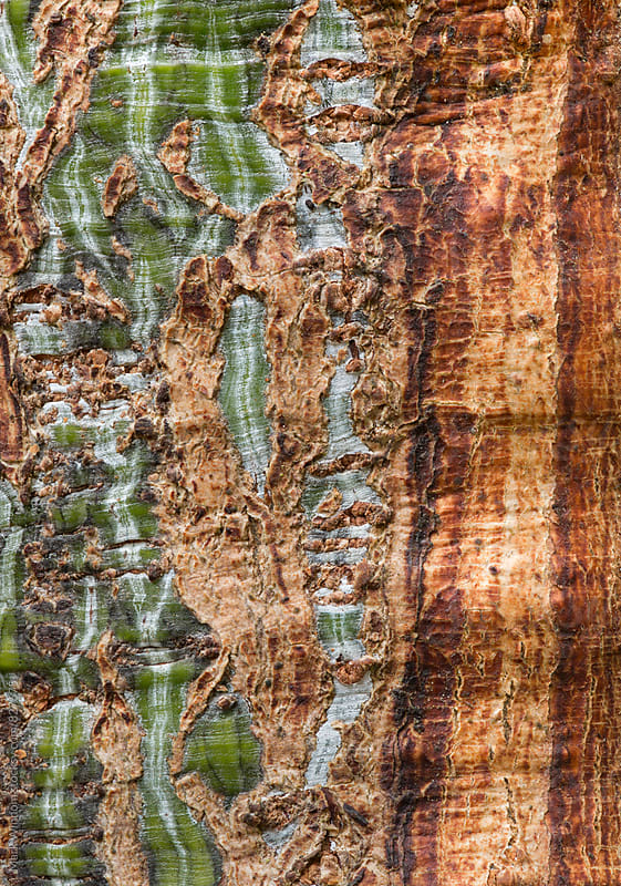 Damaged bark patterns, closeup by Mark Windom for Stocksy United