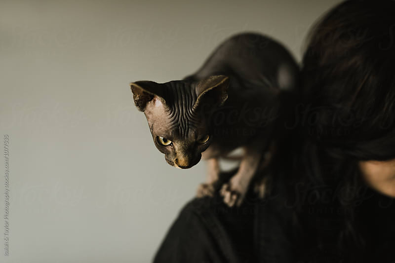 Cat on Woman