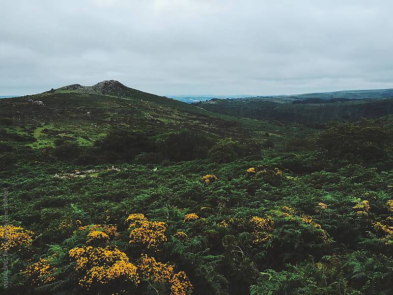 Early Morning Shot of Green Dartmoor National Park Landscape by VISUALSPECTRUM for Stocksy United