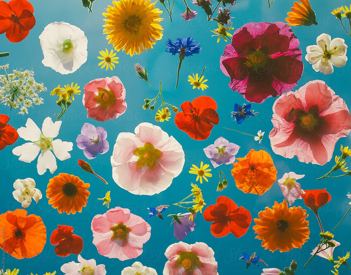Blooming colorful flowers pattern background. by Nabi Tang for Stocksy United