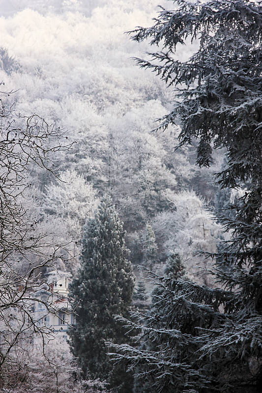 A traditional German building tucked on a hillside in winter, Heidelberg, Baden-Württemberg by Holly Clark for Stocksy United