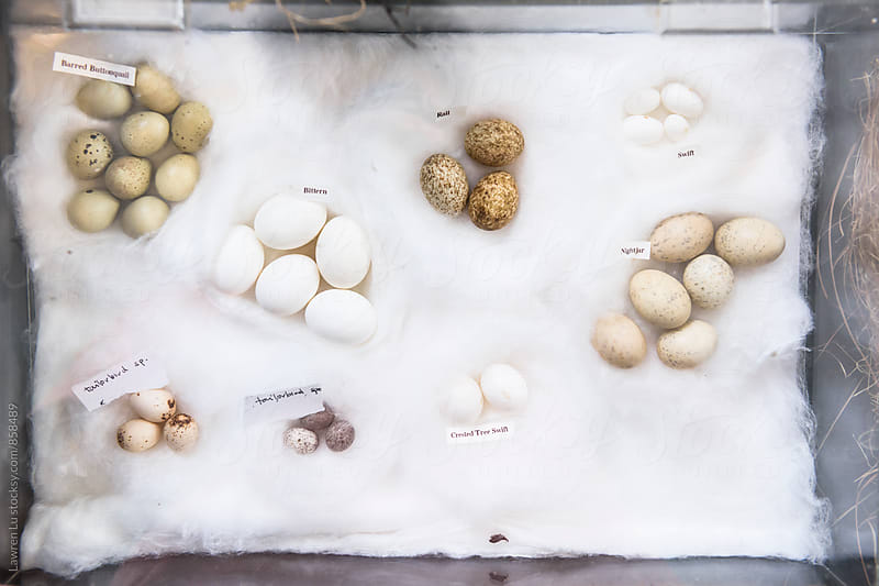 Different kinds of bird eggs with label by Lawren Lu for Stocksy United