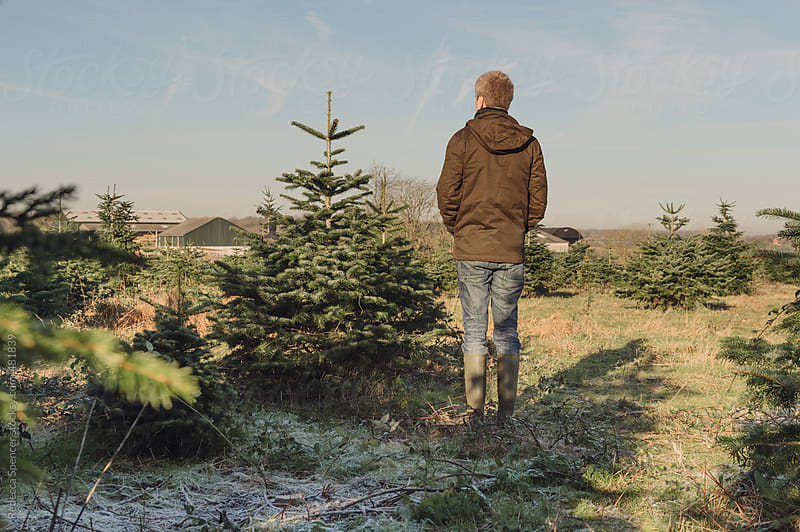 Rear view of man with his chosen Christmas tree by Rebecca Spencer for Stocksy United