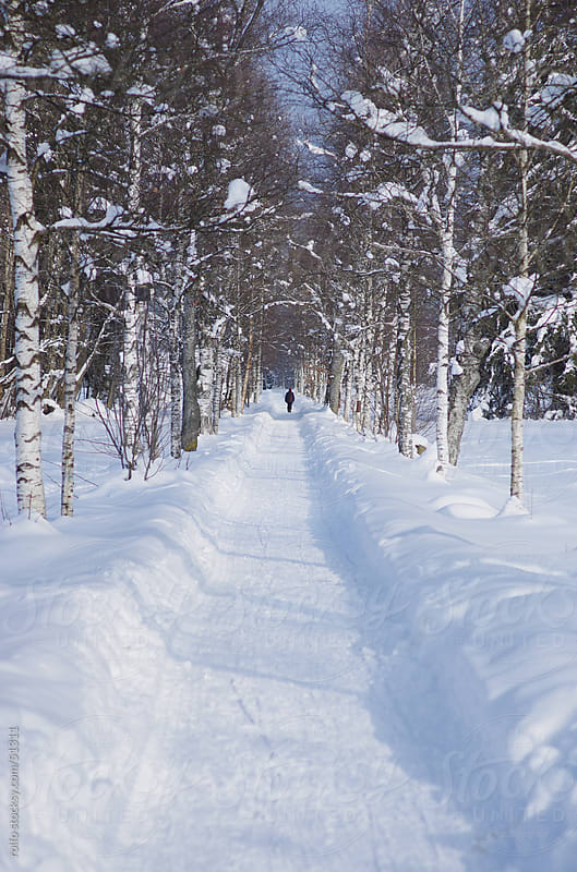 snowy way trees person walking path by rolfo for Stocksy United