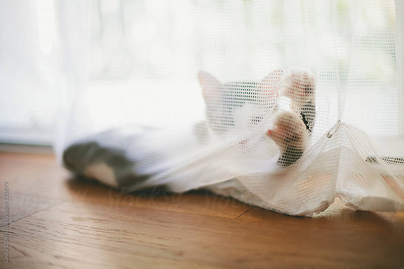 How to destroy a curtain (and look straight at the camera) by Laura Stolfi for Stocksy United