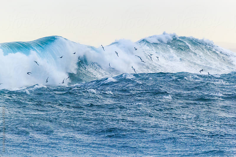 Seagulls and a large wave by John White for Stocksy United