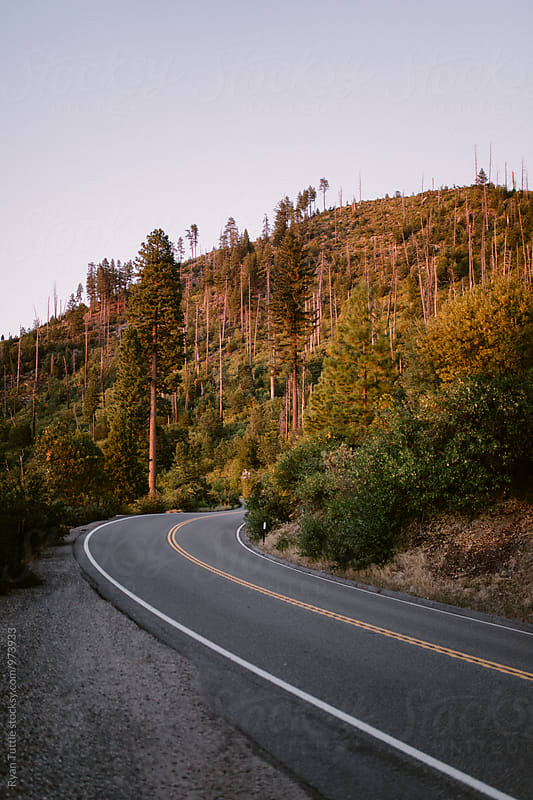 Yosemite Wawona Road by Ryan Tuttle for Stocksy United