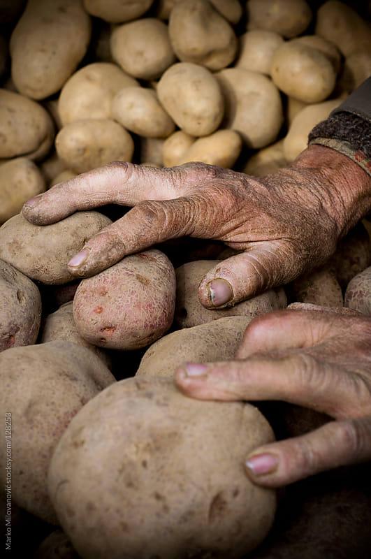 Old mans hands on potato by Marko Milovanović for Stocksy United