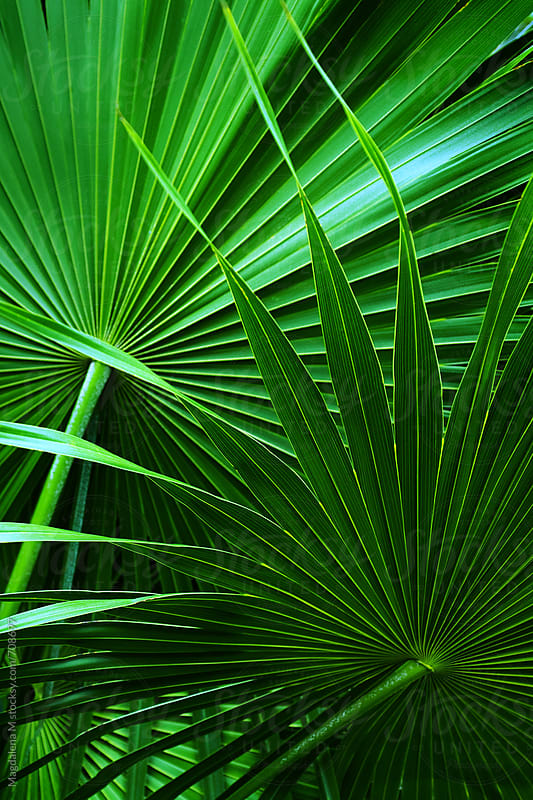 Tropical leaves by Magdalena MM for Stocksy United