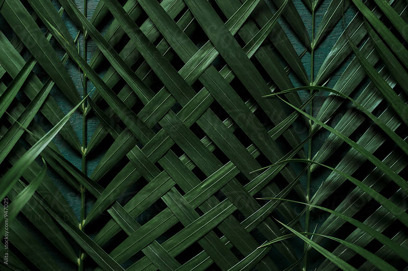 Woven palm leaf by Alita Ong for Stocksy United