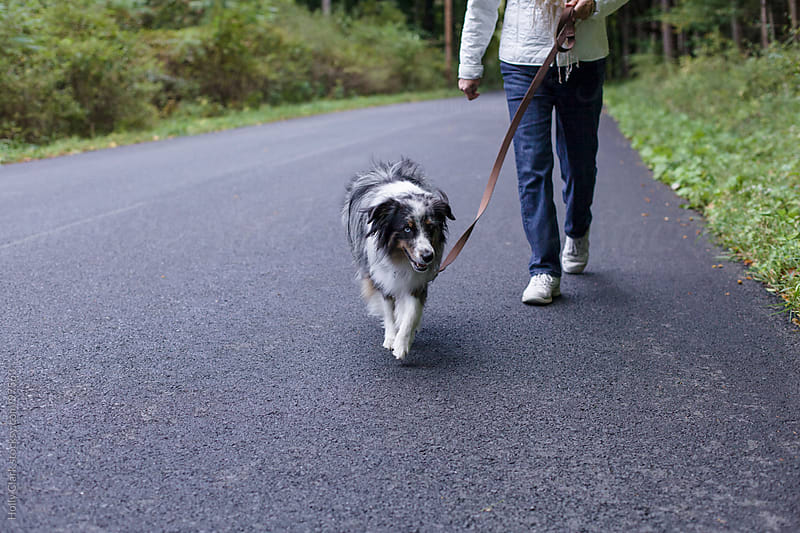 A dog walks down the road ahead of his owner. by Holly Clark for Stocksy United
