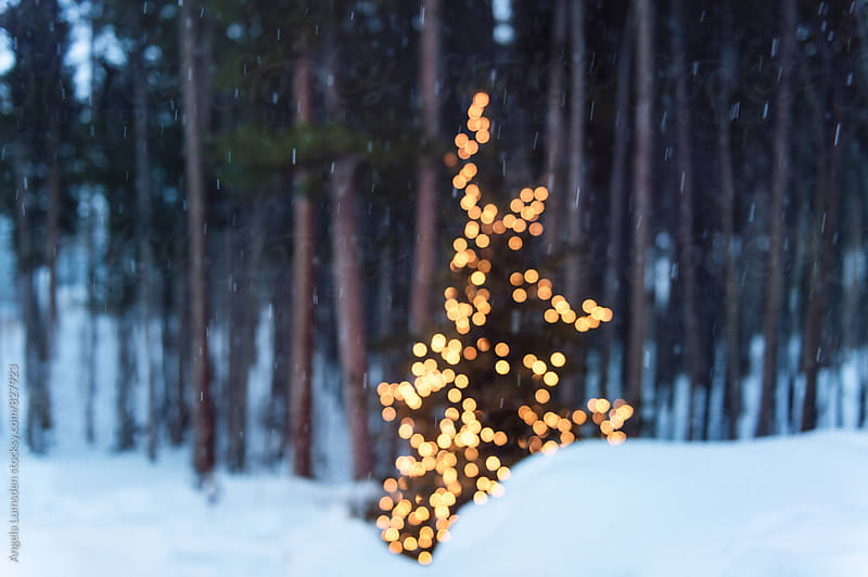 Outdoor christmas tree in snow at night by Angela Lumsden for Stocksy United