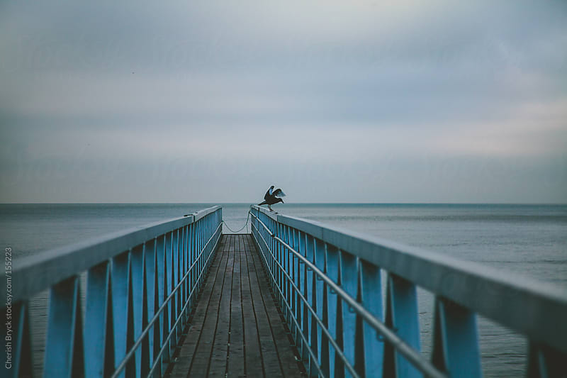 Bird on a pier. by Cherish Bryck for Stocksy United