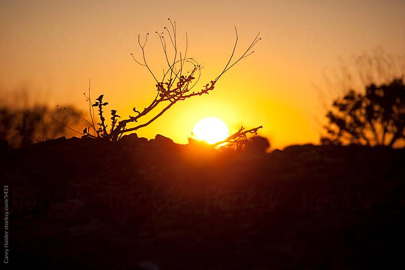 Arizona Sunset by Carey Haider for Stocksy United