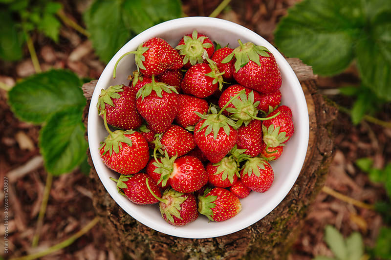 bowl of home grown strawberries by Brian Powell for Stocksy United