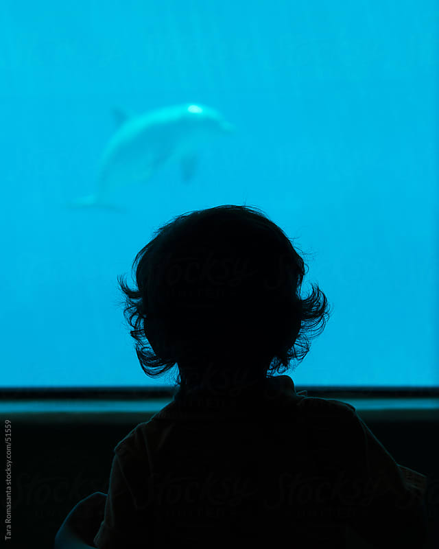 boy watches dolphin watching him  by Tara Romasanta for Stocksy United