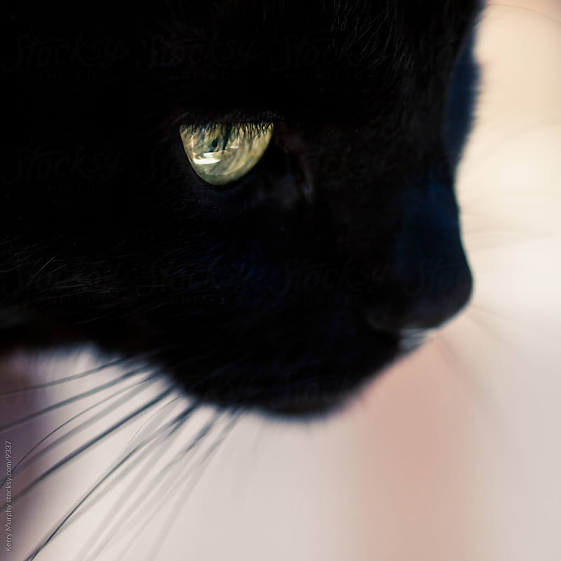 Square crop of black cat close up by Kerry Murphy for Stocksy United