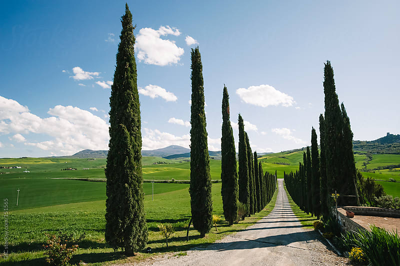 Treelined Country Road Farm In Val D'Orcia by GIC for Stocksy United