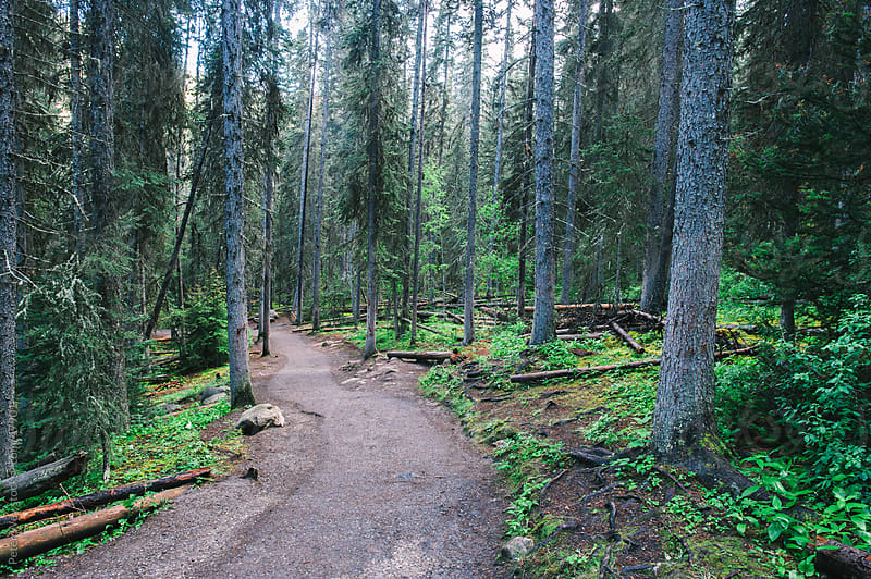 Hiking trail inside forest in Banff National Park, Alberta, Cana by Peter Wey for Stocksy United