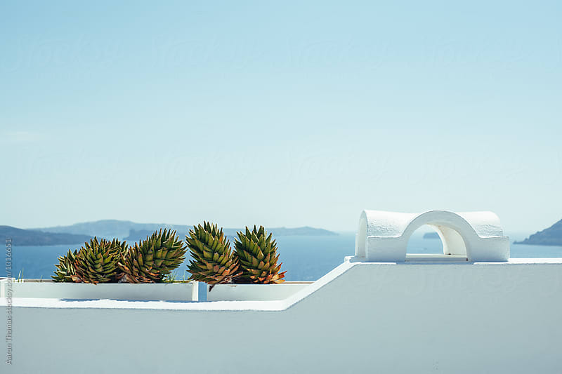 Cactus plant in Santorini by Aaron Thomas for Stocksy United
