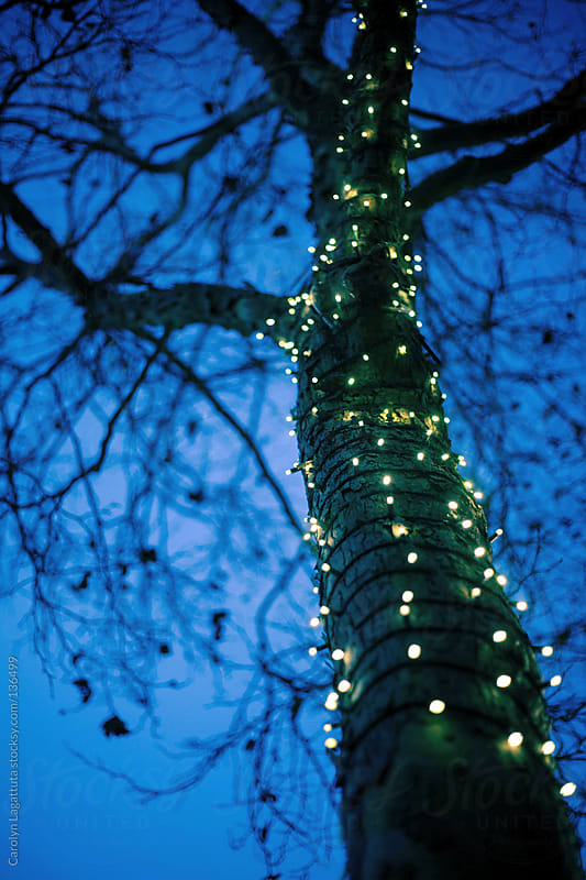 Looking up at the silhouette of a tree wrapped in little white lights - blue dusky sky  by Carolyn Lagattuta for Stocksy United