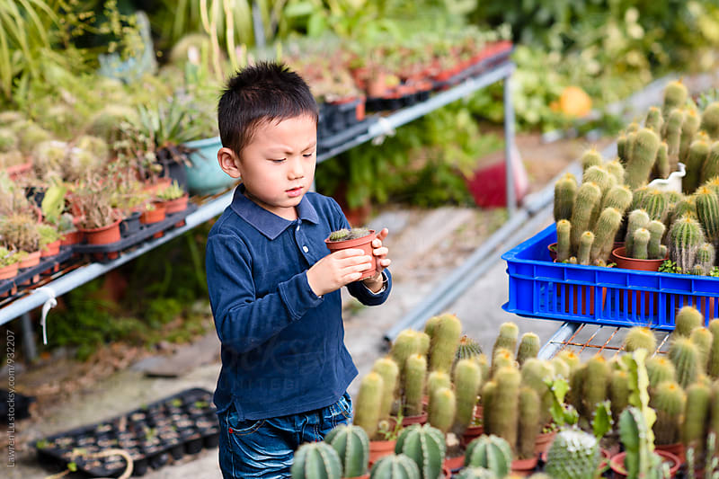 Cute little boy looking seriously at cactus in hands. by Lawren Lu for Stocksy United