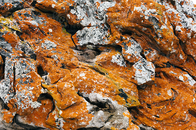 Orange Algae growing on rock by Jacqui Miller for Stocksy United