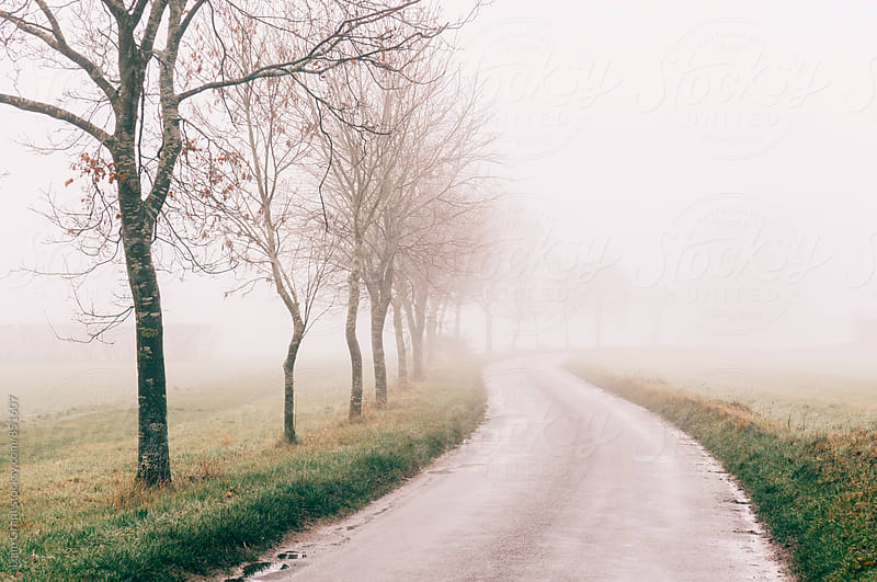 Rural tree lined road in fog. Norfolk, UK. by Liam Grant for Stocksy United
