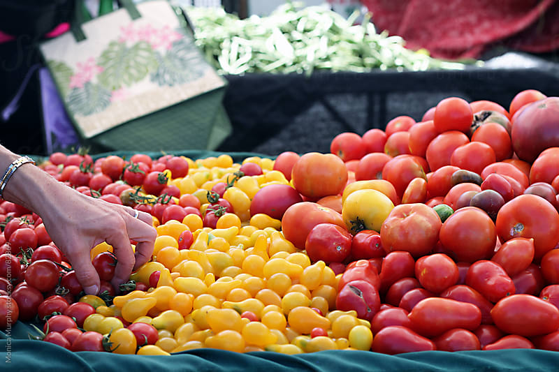 Hand picking tomatoes at the local farmers market by Monica Murphy for Stocksy United