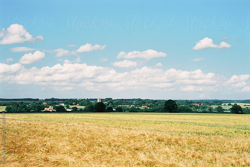 Barley field on a summer day. Castle Acre, Norfolk, UK. by Liam Grant for Stocksy United