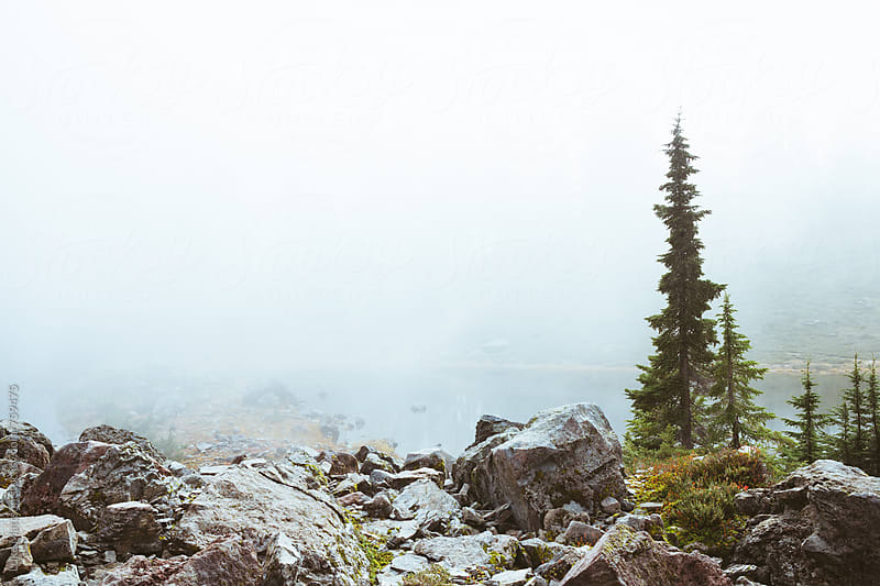 Subalpine Fir And Boulders Set In By Thick Fog by Luke Mattson for Stocksy United