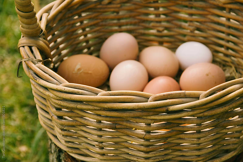 Basket of freshly collected chicken eggs by Tari Gunstone for Stocksy United