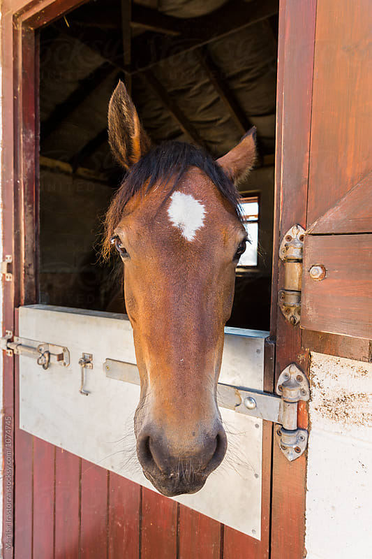 Horse in his stable by Marilar Irastorza for Stocksy United