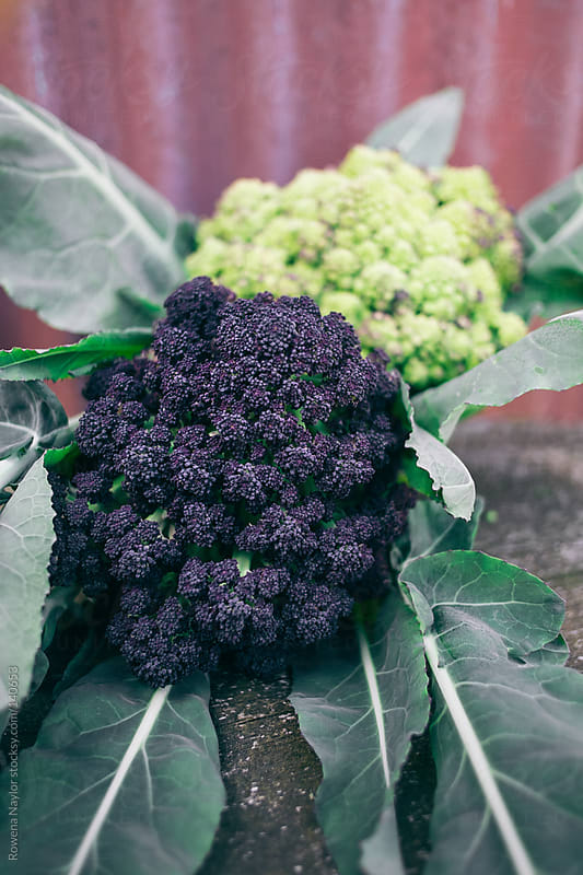Organic Broccoli and Cauliflower by Rowena Naylor for Stocksy United