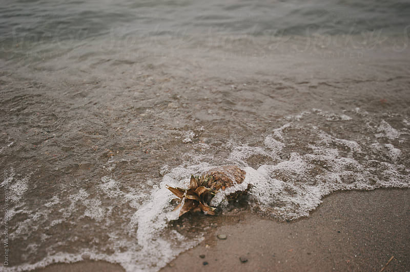 Pineapple washing ashore on the sand beach by Daring Wanderer for Stocksy United