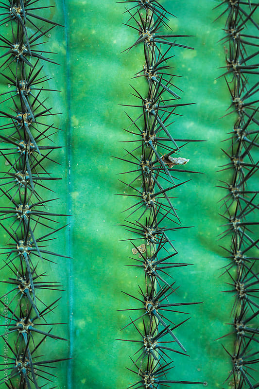 cactus by alan shapiro for Stocksy United