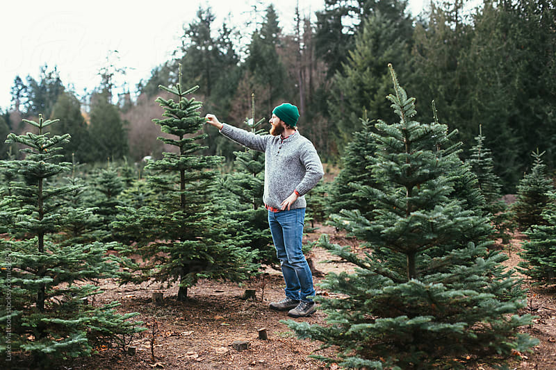 Bearded Man Wearing Green Beanie And Wool Sweater Inspecting Christmas Tree by Luke Mattson for Stocksy United