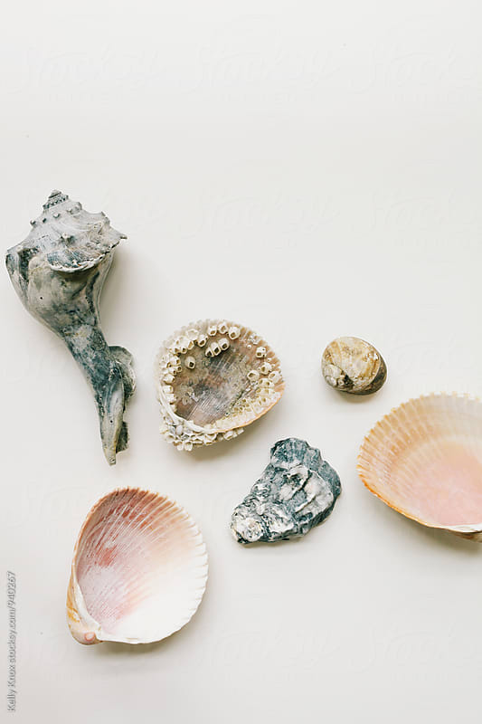 random assortment of shells on white by Kelly Knox for Stocksy United