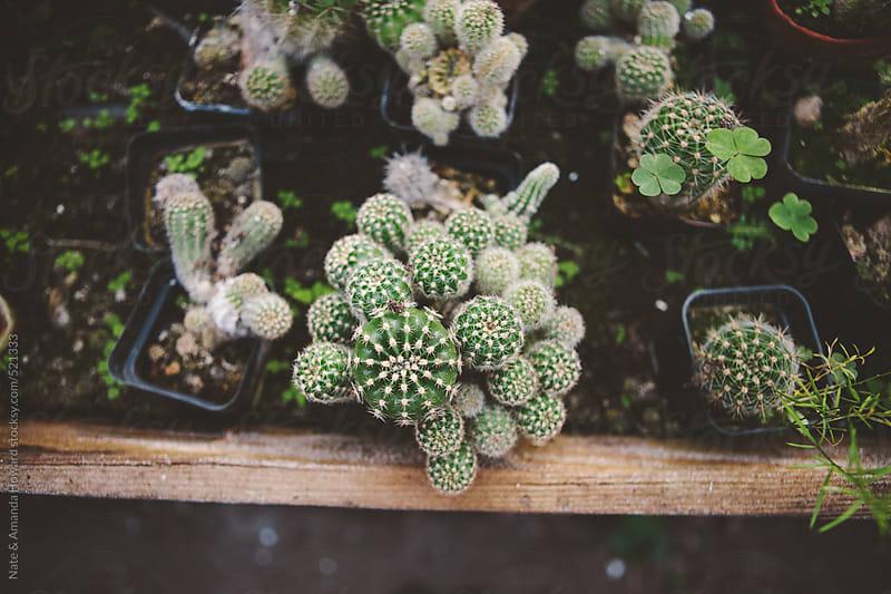 greenhouse plants by Nate & Amanda Howard for Stocksy United