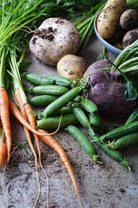 Fresh vegetables harvested from the garden. by Darren Muir for Stocksy United