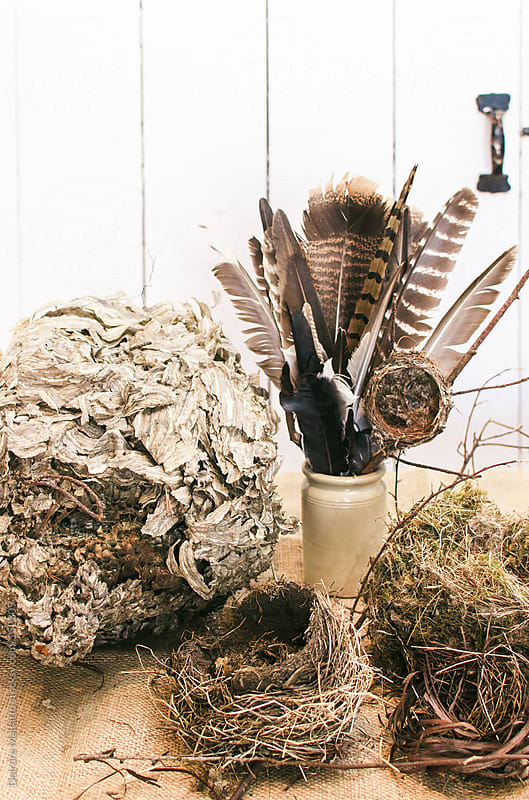 a collection of natural artifacts including nests and feathers by Deirdre Malfatto for Stocksy United