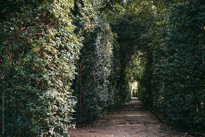 Pathway down a hedge wall towards a stone bust in Florence by Sarah Lalone for Stocksy United