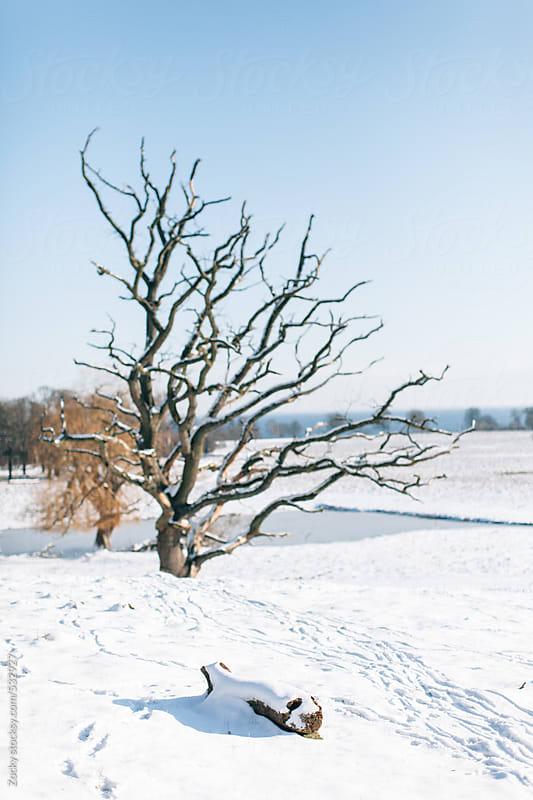 Dead Tree by Zocky for Stocksy United