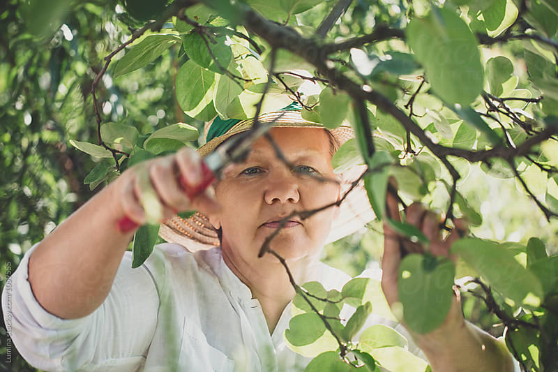 Gardener Cutting Leaves by Lumina for Stocksy United