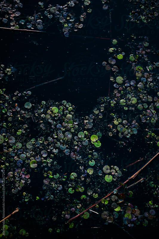 Detail shot of swamp by Aleksandar Novoselski for Stocksy United
