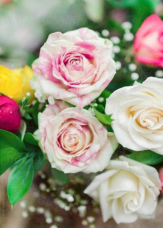 Close up of motled cream and pink roses in flowers bouquet by Laura Stolfi for Stocksy United