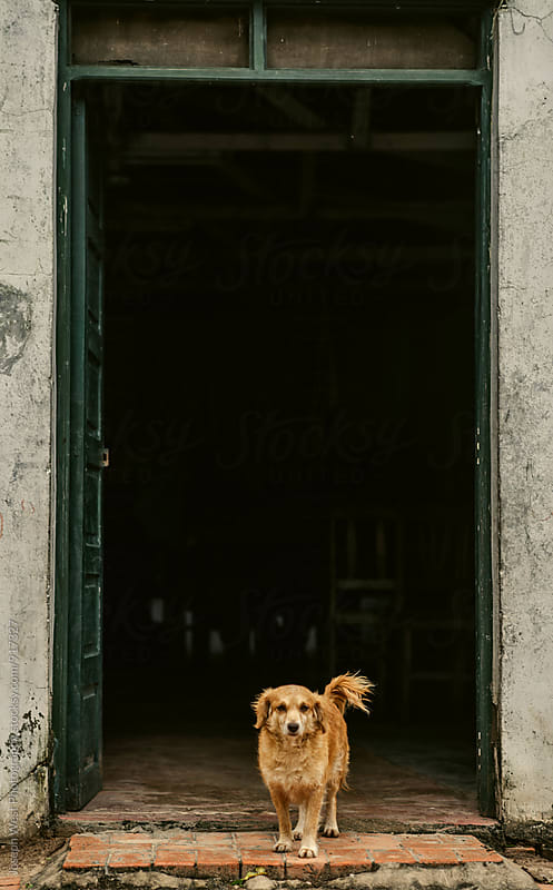 Dog in a doorway by Joseph West Photography for Stocksy United