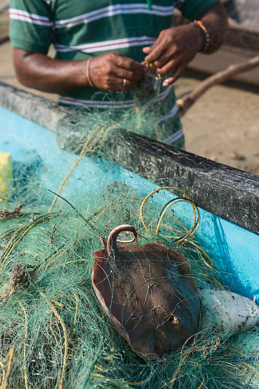 man untangling his fishing with fresh caught fish  by RG&B Images for Stocksy United