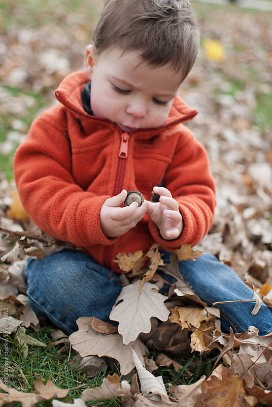 young boy explores acorn by Margaret Vincent for Stocksy United