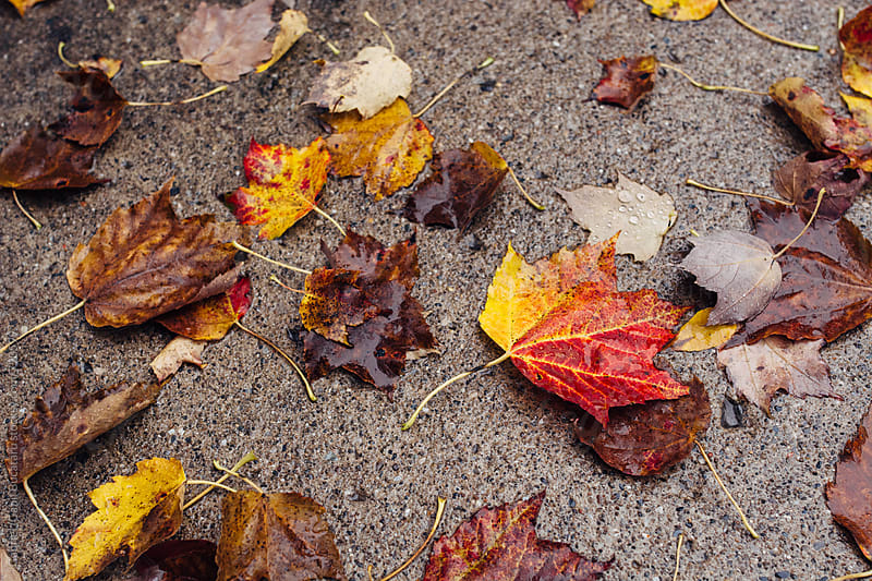 Fallen autumn leaves on a wet ground by Gabriel (Gabi) Bucataru for Stocksy United